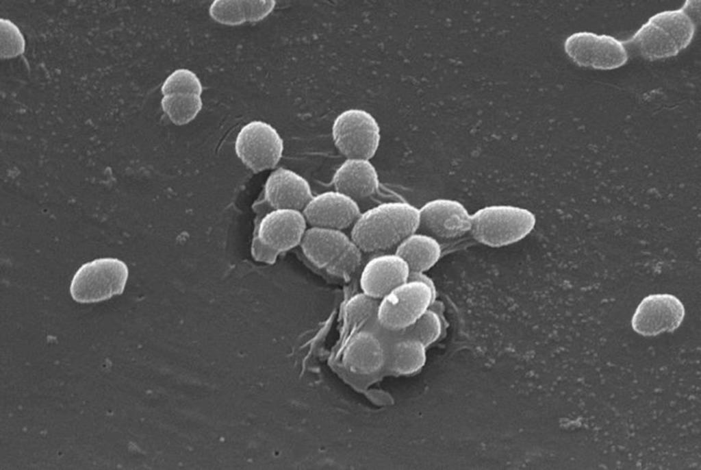 乳酸菌のイメージ